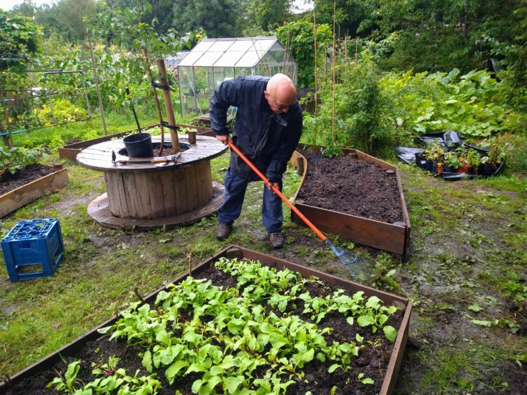 Man raking between raised beds on the People's Plot, there is a greenhouse behind him and a planter made from a disused cable reel.
